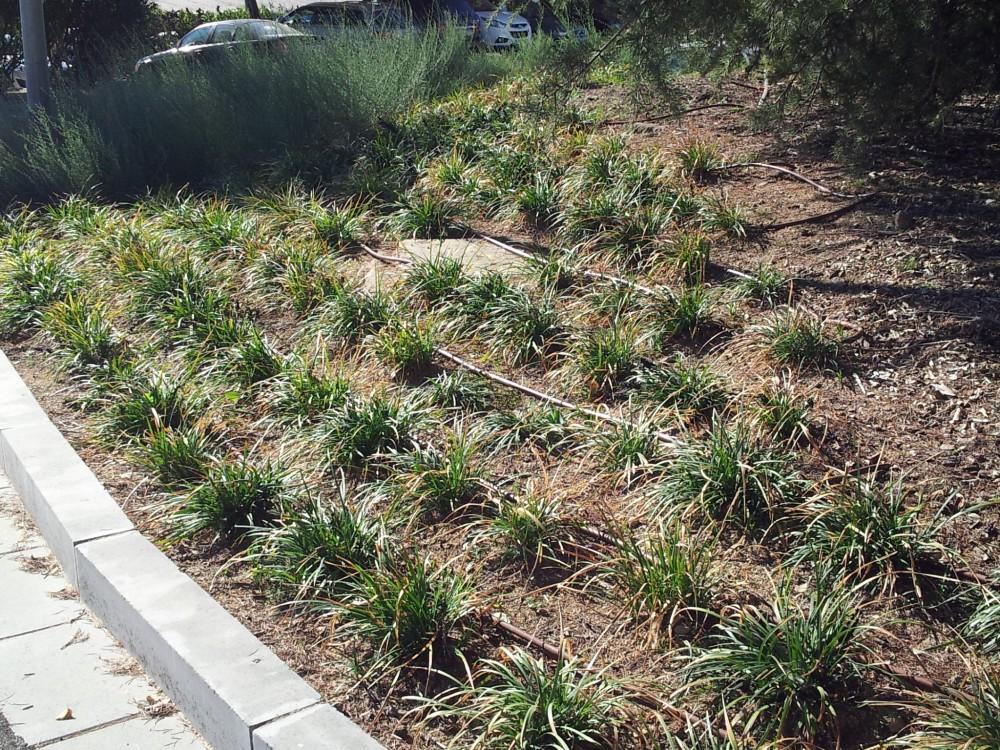 Jardineria del valles stunning semillas with jardineria for Jardineria barcelona centro